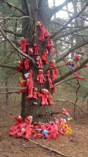 Elmos tree